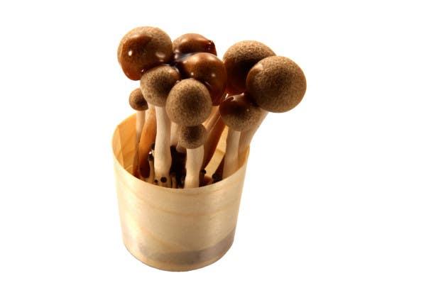 medium pinewood cups