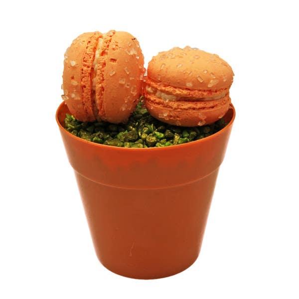 mini terracotta pot